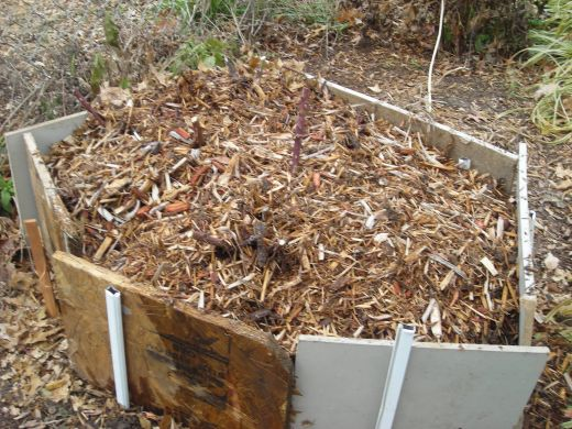 cover roses with mulch for winter