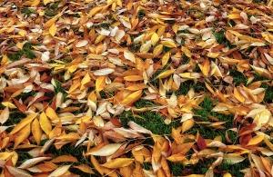 Leaves on Turf 2 pixabay