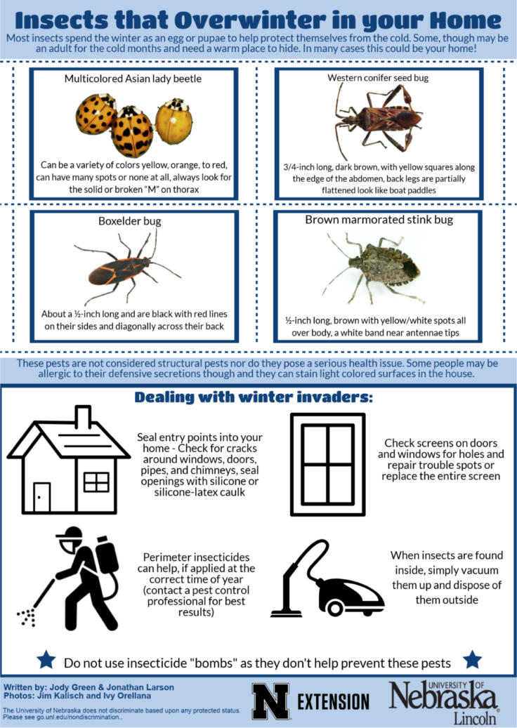 2018 Overwintering pests infographic.png