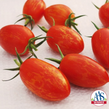 Tomato_Torch_F1_Logo.jpg