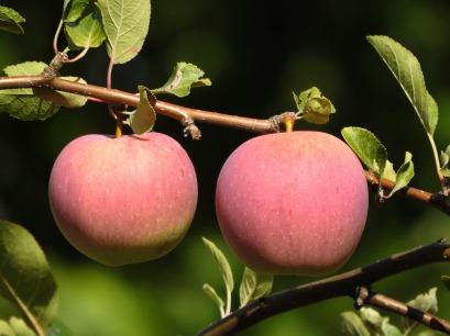 apple-3697023_1920.jpg