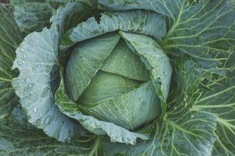 cabbage-1850722_1920