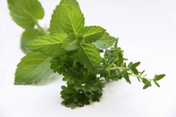 herbs-3606074_1920 (1)