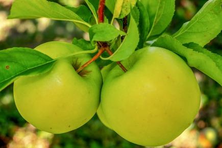 apple-3672082_1920