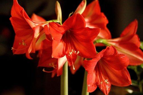 flower-4666454_1920