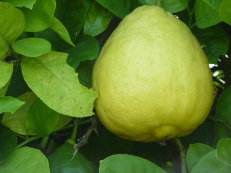 lemon-276542_1920