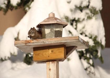 squirrel-581566_1920