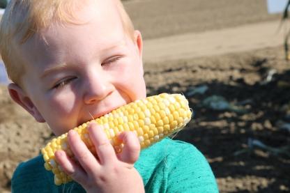 Corn_Obsession3_Seminis