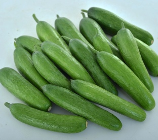 Cucumber-Green-Light