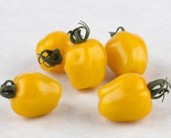Tomato-Apple-Yellow-SQ-PRIMARY-scaled