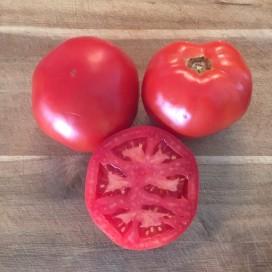 Tomato-Galahad-F1-square