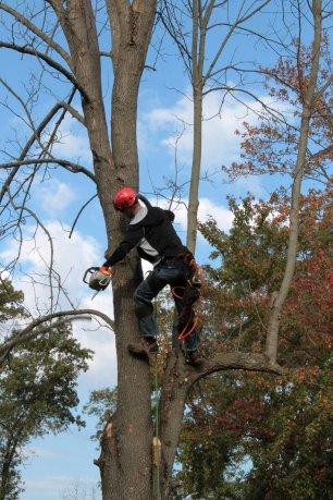 tree-1059416_1920